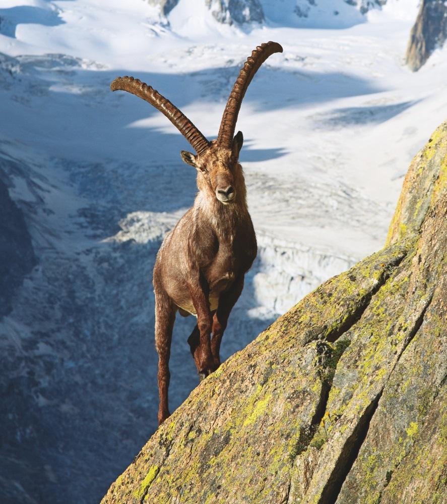 09|03|2015 – GEOBUCH Event-Highlights im März | Alpen, Knoten und Iran