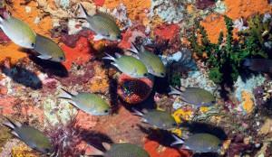 Die letzten Naturparadiese Great Barrier Reef