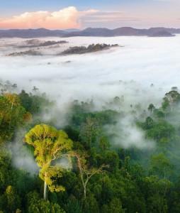 Die letzten Naturparadiese Regenwald von Borneo