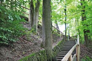 Münchner Bergführer Waldanstieg