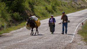 Uli Kaukasus - Esel