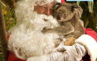 Santa und Koala - Newsletter Cover